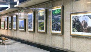 Выставку картин художника-акварелиста откроют в «Аптекарском огороде». Фото: официальный сайт мэра Москвы