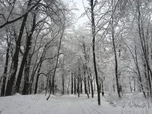 Сотрудники «Жилищника» рассказали о планах озеленения в районе. Фото: Анна Быкова