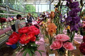 Выставка лилейников пройдет в «Аптекарском огороде». Фото: Анна Быкова