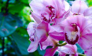 Фестиваль орхидей «Тропическая зима» пройдет в «Аптекарском огороде». Фото: сайт мэра Москвы