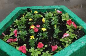 Однолетние цветы высадили во дворах района. Фото предоставили сотрудники ГБУ «Жилищник»