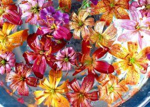 Выставку декоративно-лиственных растений откроют в «Аптекарском огороде». Фото предоставили сотрудники пресс-службы «Аптекарский огород»