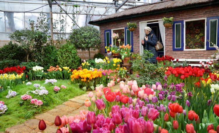 Акция «Культурная ботаника» пройдет в «Аптекарском огороде». Фото: Анна Быкова