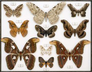 Новую коллекцию насекомых увидят гости «Аптекарского огорода». Фото предоставили в пресс-службе «Аптекарского огорода»