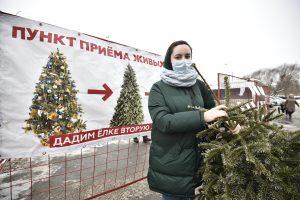 Жители района могут сдать елки на переработку. Фото: Пелагия Замятина, «Вечерняя Москва»