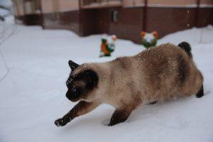 Статью о Дне кошки опубликовали на сайте библиотеки для слепых. Фото: Владимир Смоляков «Вечерняя Москва»