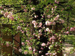 Весенний фестиваль цветов скоро начнется в «Аптекарском огороде». Фото предоставили в пресс-службе «Аптекарского огорода»